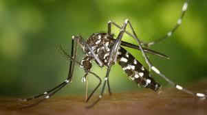 puntura di zanzara tigre